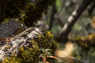 Reptar – Castle Rock State Park